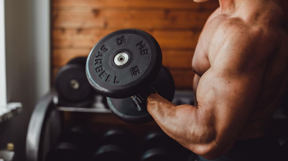 outer biceps workout